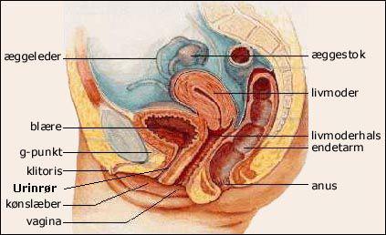 abdominale smerter under samleje fisse og pik
